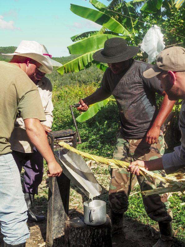 Cuba Viñales Valley sugar cane